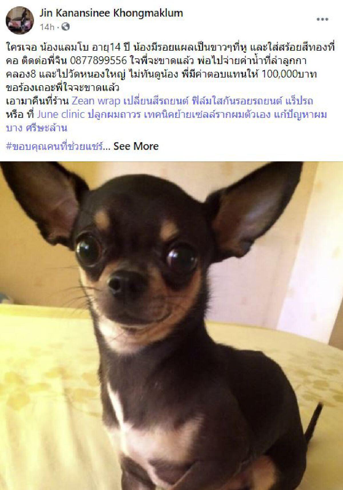คุณป้าเปิดใจ ทำไมไม่รับเงินรางวัล ขอบคุณในความหวังดีของสาวเจ้าของสุนัข