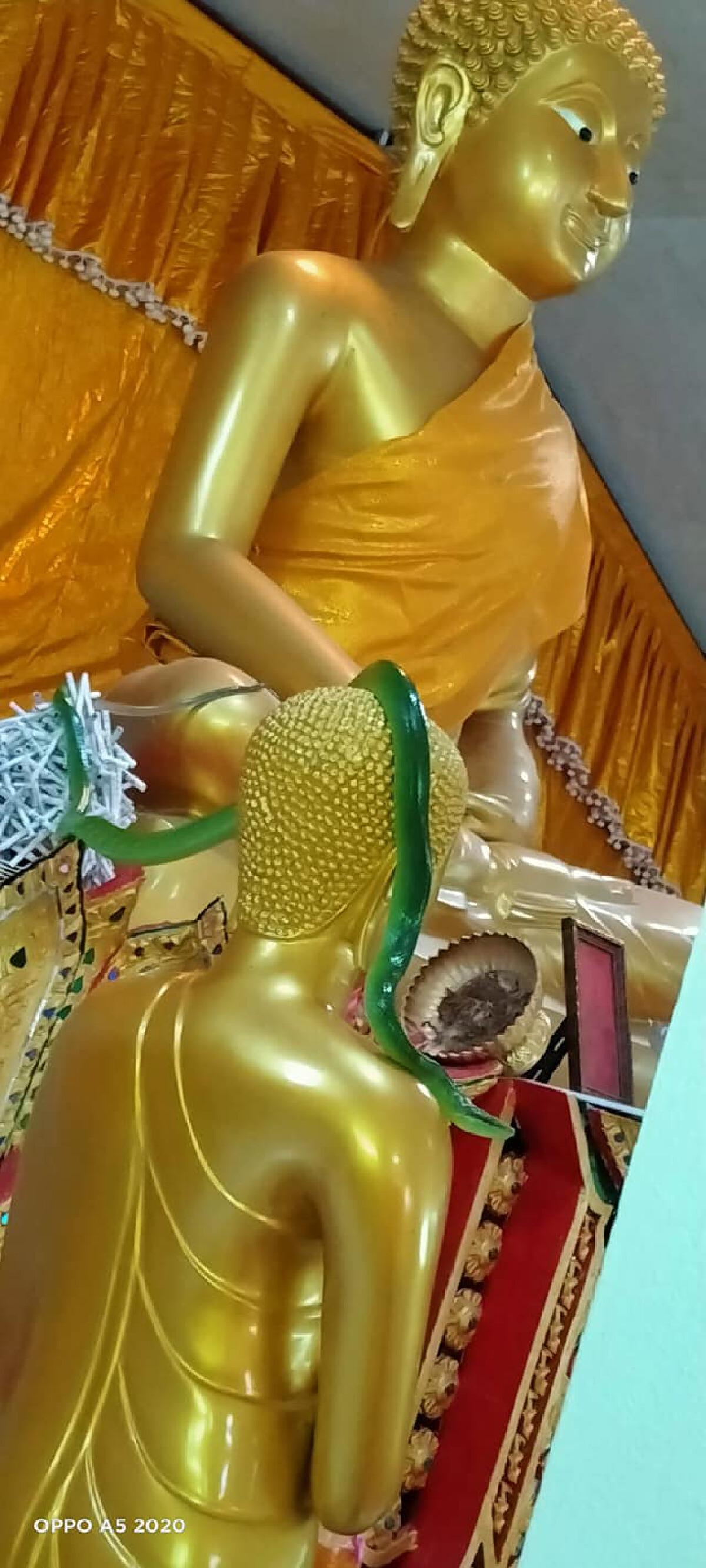 พระสงฆ์เผยภาพงูเขียวสีมรกต ขดบนเศียรพระพุทธรูปในวันพระ