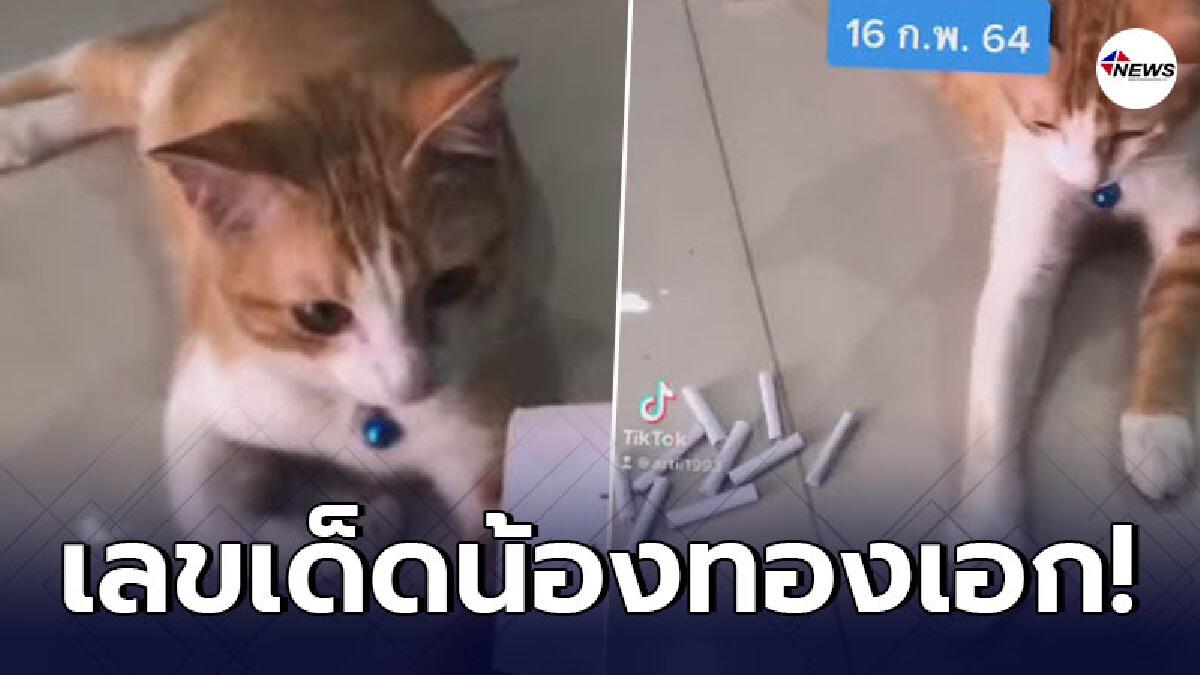 น้องทองเอกแมวส้มใบ้เลขเด็ด หลังงวดที่แล้วให้ทาสถูกเลขท้าย 2 ตัวเต็มๆ