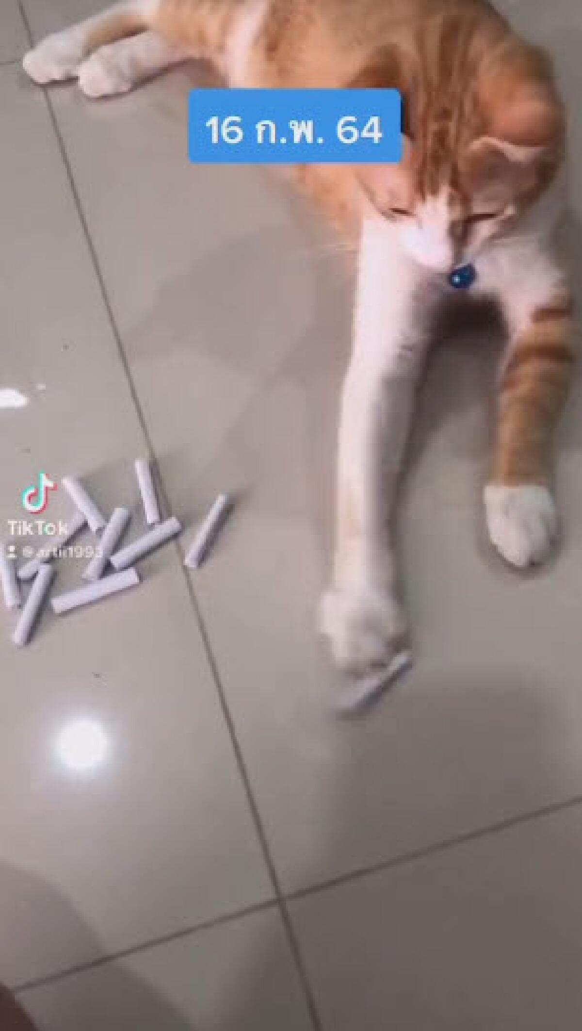 หนุ่มถ่ายแมวส้มลูกรัก สุ่มเลือกเลขเด็ดก่อนตัดสินใจเสี่ยงโชค