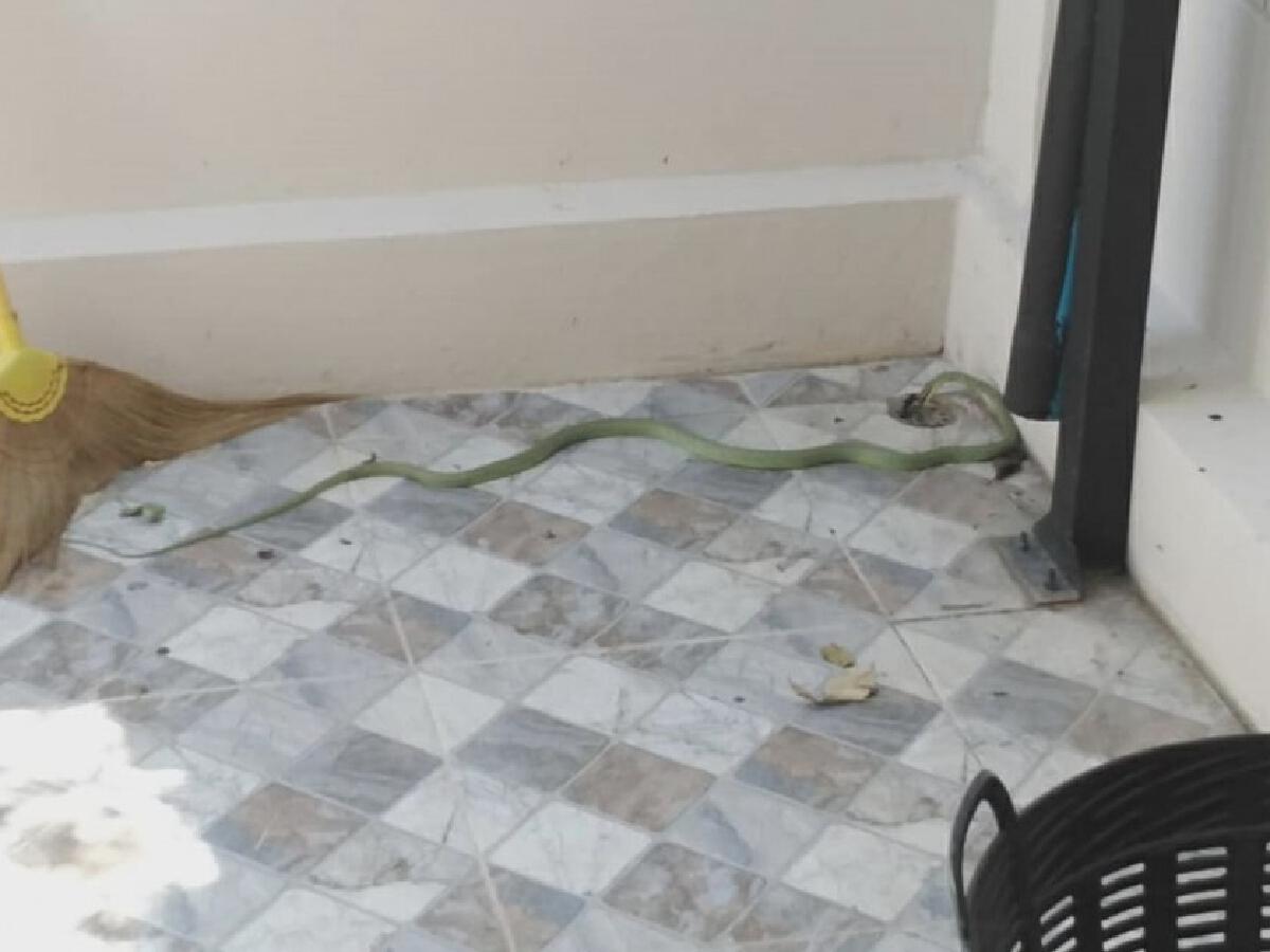 งูเลื้อยเข้าบ้านหนุ่มนักมายากล วันเดียว 2 ตัว เข้า 4 รอบ