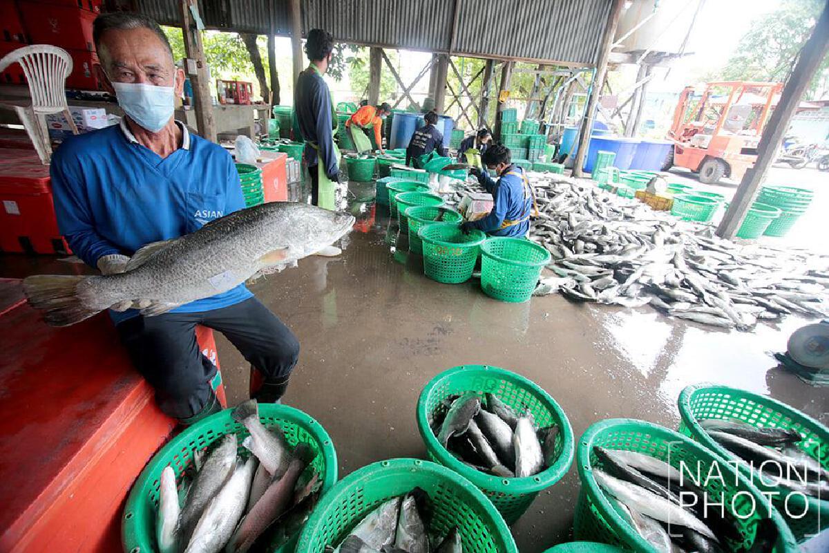 เกษตรกรเลี้ยงปลากระพง