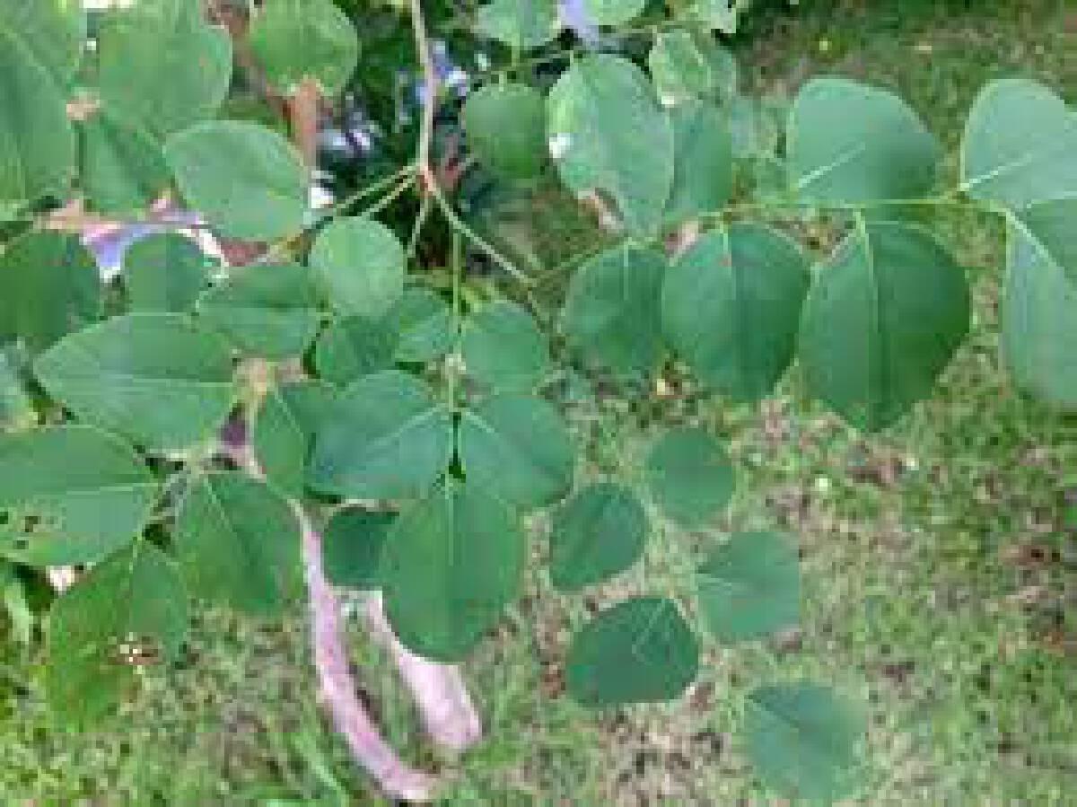 ต้นไม้มงคลเสริมดวง เสริมโชค ปลูกติดบ้านไว้ชีวิตราบรื่น