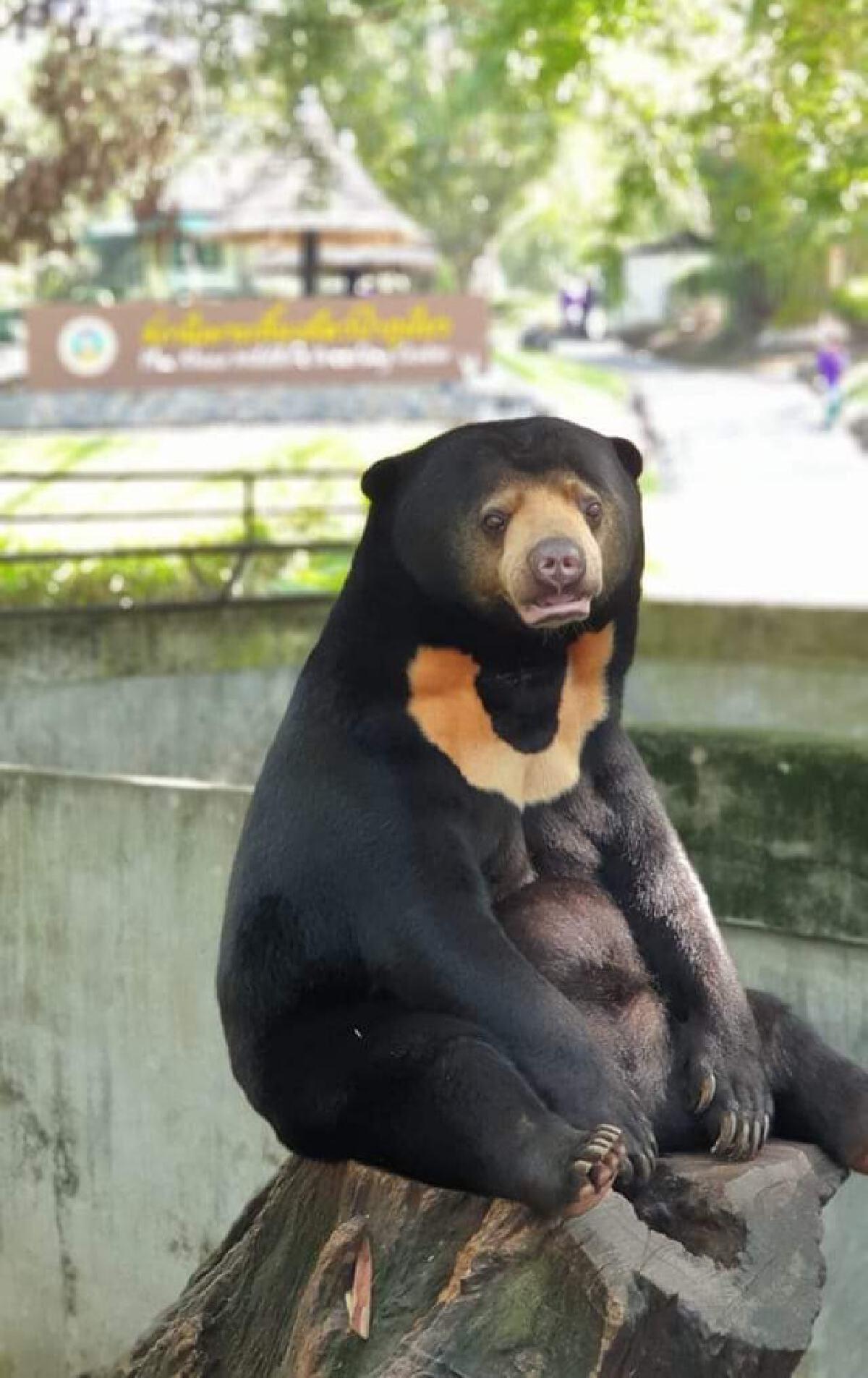 เผยภาพหมีหมานั่งเรียบร้อย หลังเจ้าหน้าที่ติดป้ายเตือนให้ทำตัวสุภาพ