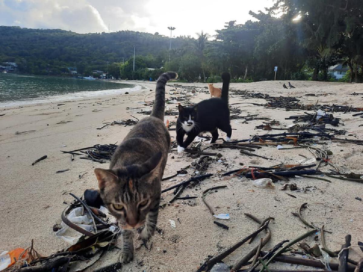 แมวบนเกาะพีพี
