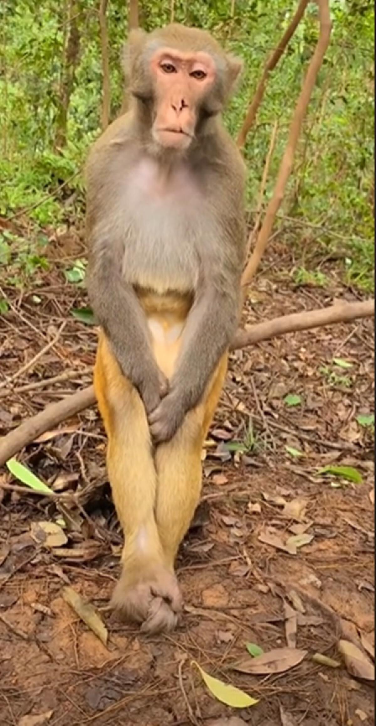 น้องลิงเศร้านั่งนิ่ง ทำหน้าไร้อารมณ์ จนชาวเน็ตแซวเบื่อโลกอะไรขนาดนั้น