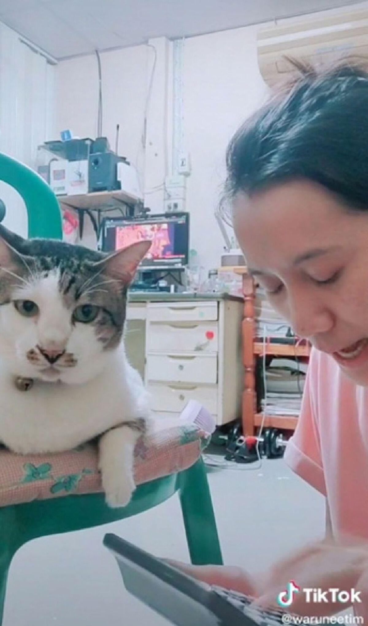 สาวทวงเงินแมว 8 แสน