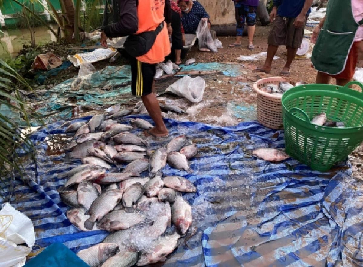 ชาวบ้านพลิกวิกฤติ ใช้โอกาสหลังน้ำลด จับปลาขายเต็มข้างทาง หลังน้ำท่วมหนัก