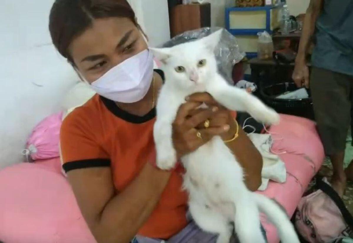 แม่แมวคลอดลูกแมวตาเดียว