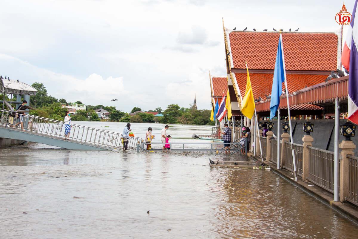 ภาพหาชมยาก ปลาว่ายน้ำข้ามสะพาน ท่าน้ำวัดพนัญเชิงวรวิหาร