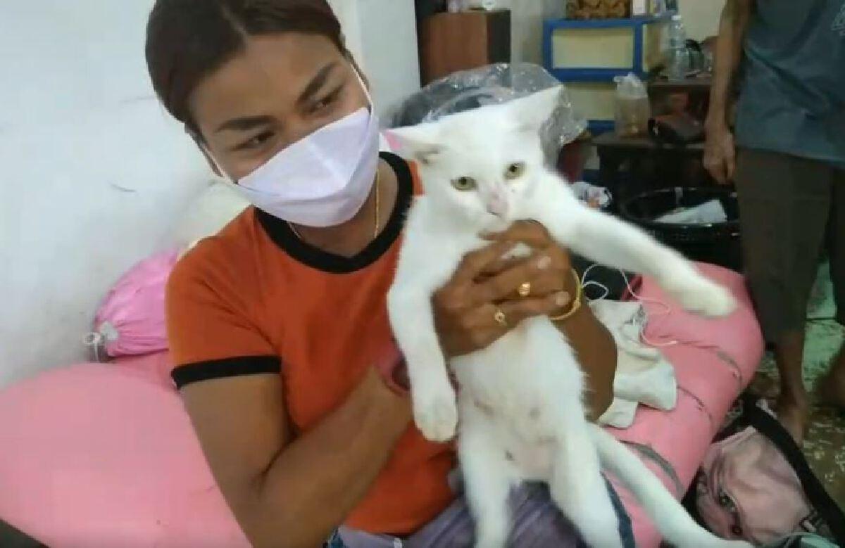 เเม่ค้าโชว์เลขเด็ด หลังแมวคลอดลูกออกมามีตาเดียว นำใส่พานบูชา