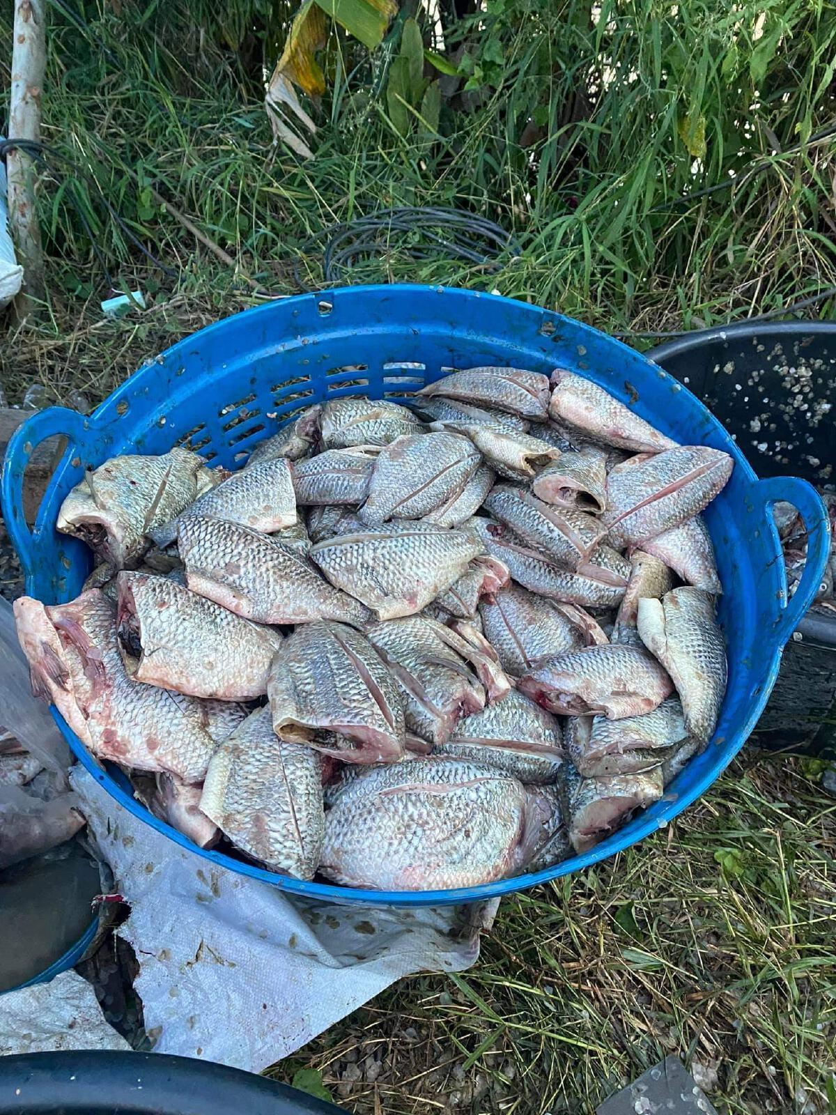 ชาวบ้านพลิกวิฤติ หลังน้ำลดแห่จับปลาขาย หารายได้เสริม